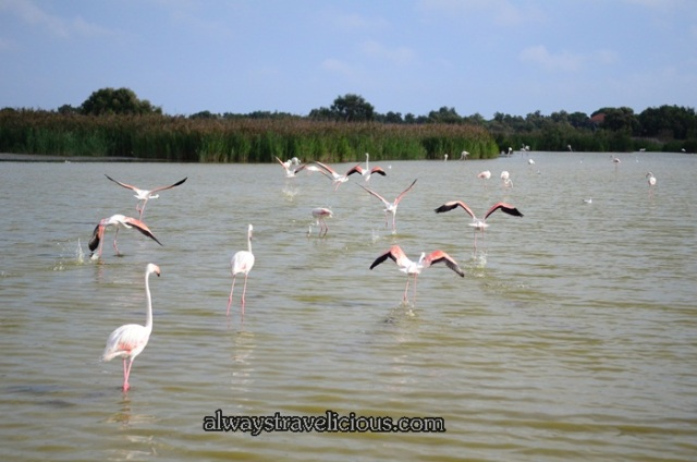 Flamingos @ Parc Ornithologique @ Camargue 41