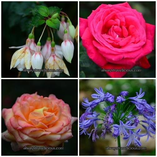 Rose Valley @ Cameron Highlands 2