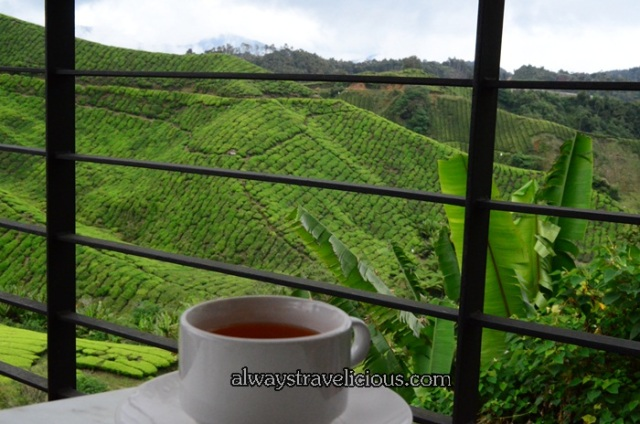 boh tea plantation @ Cameron Highlands 6
