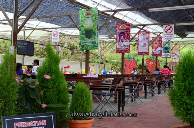 Big Red Strawberry Farm @ Cameron Highlands 15