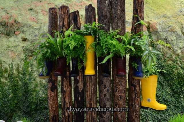 lavender garden @ Cameron highlands 13