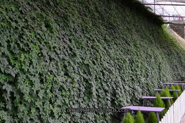 lavender garden @ Cameron highlands 30