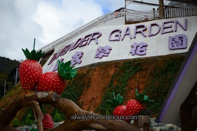 lavender garden @ Cameron highlands 46