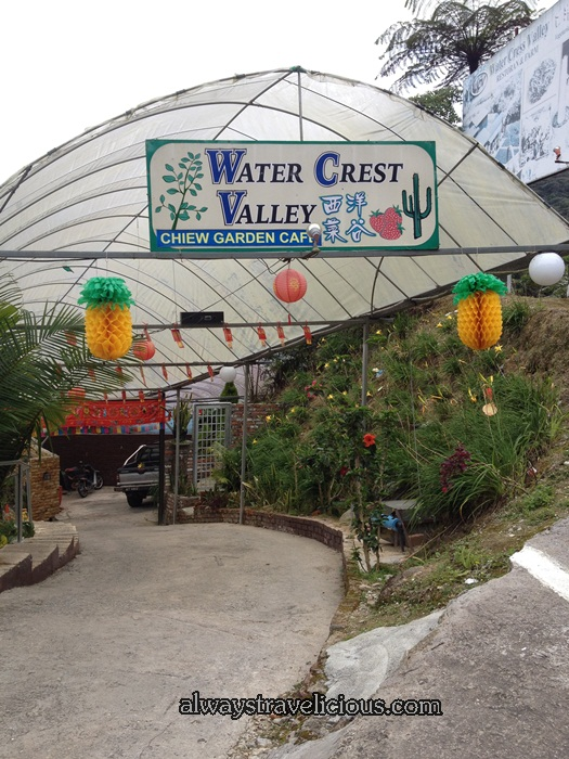 Watercress Valley @ Cameron Highlands 1