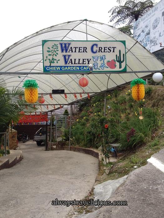 Watercress Valley @ Cameron Highlands 1