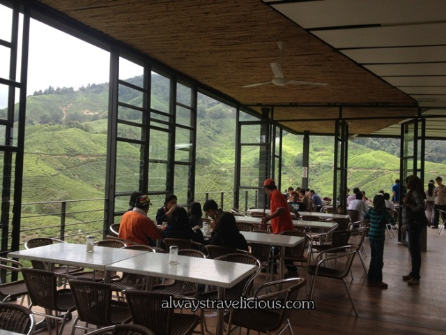 boh tea plantation @ Cameron Highlands 33