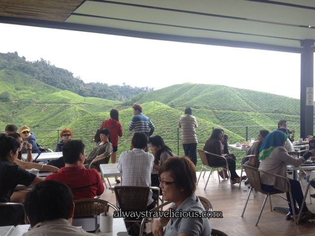 boh tea plantation @ Cameron Highlands 34
