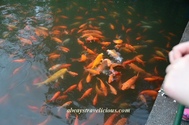 Fish viewing flower pond Hangzhou 15
