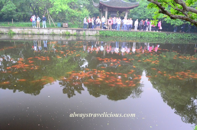 Fish viewing flower pond Hangzhou 16