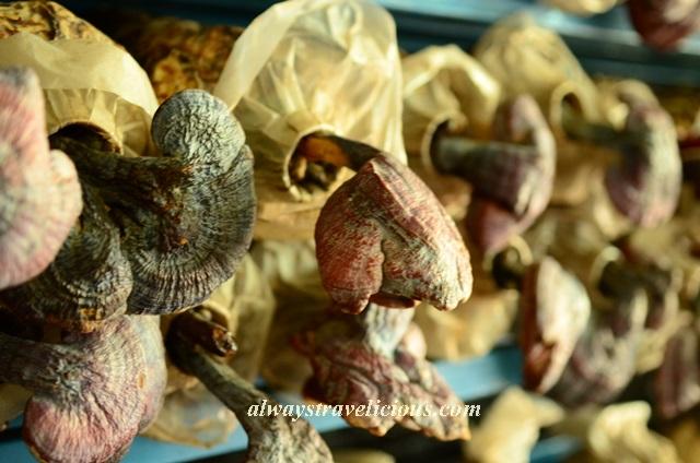mushroom farm @ cameron highlands 3