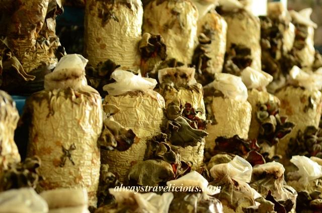 mushroom farm @ cameron highlands 18