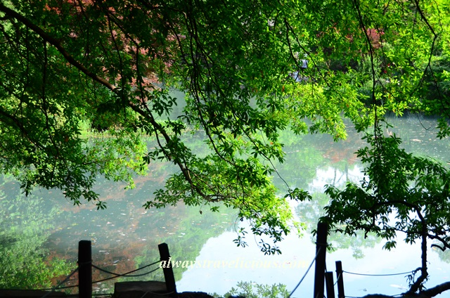Nine-creeks-misty-trees-Hangzhou 20