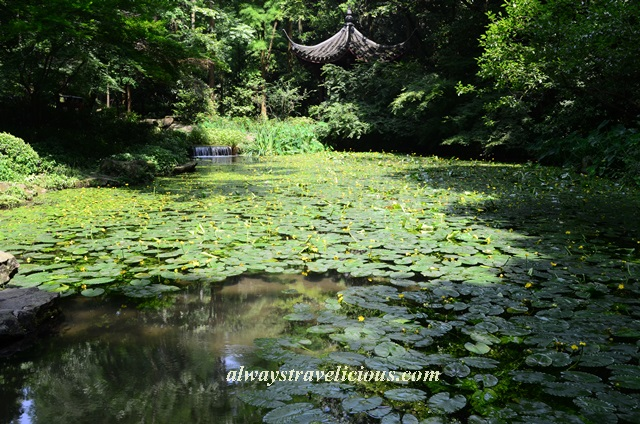 Hupao-spring-running-tiger-hangzhou 2