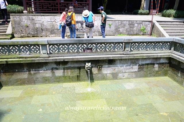 Hupao-spring-running-tiger-hangzhou 9