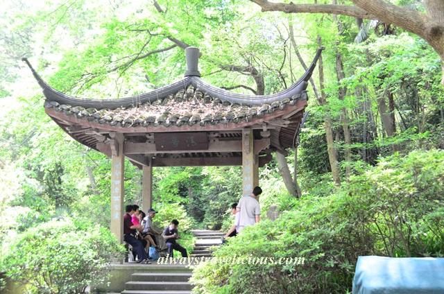 Hupao-spring-running-tiger-hangzhou 19