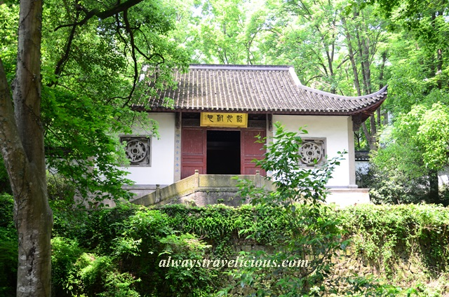 Hupao-spring-running-tiger-hangzhou 31
