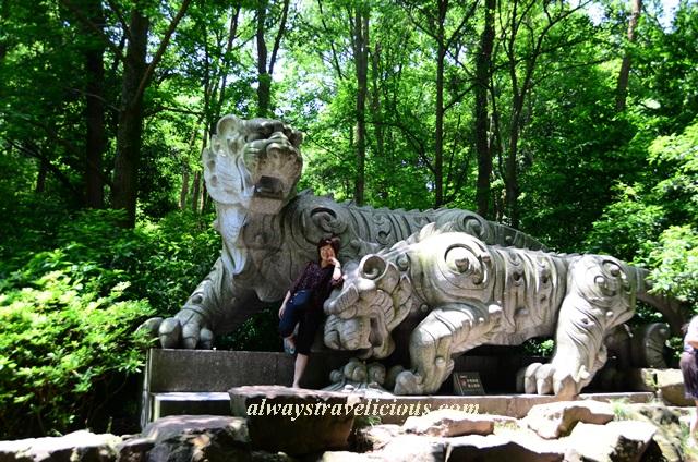 Hupao-spring-running-tiger-hangzhou 32