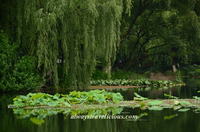 Lotus Breeze Winding Courtyard West Lake Hangzhou 6