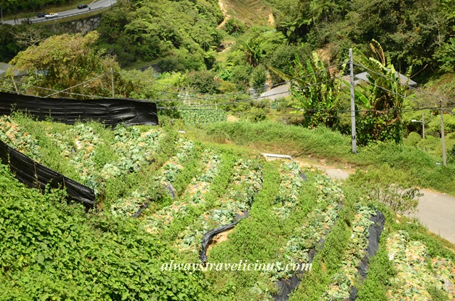 Blueberry Earthhouse @ Cameron Highlands 16